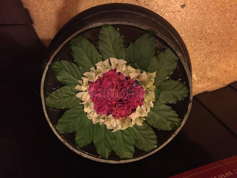 Предложения цветочной композиции Юго-Восточной Азии Камбоджи флористические стоковое изображение