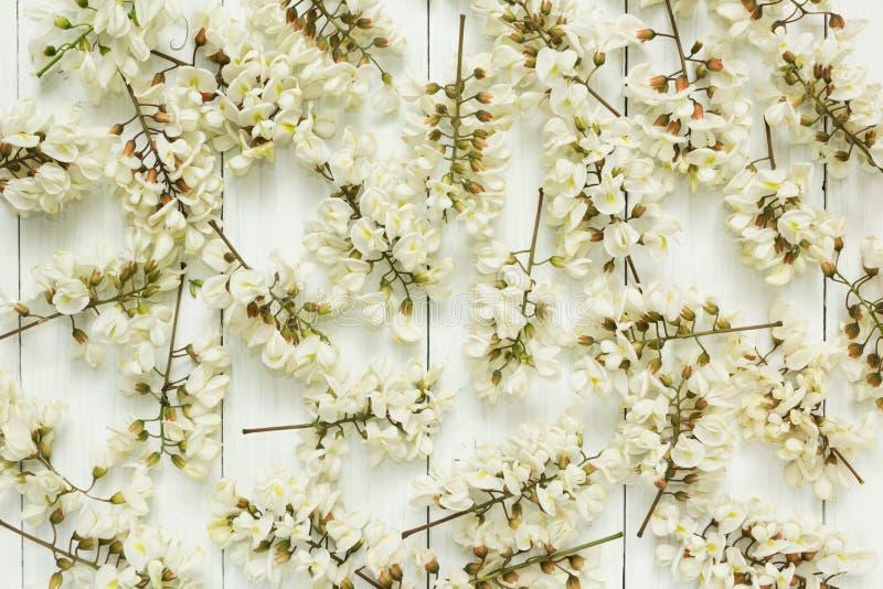 Предпосылка акации белый цвести стоковая фотография rf