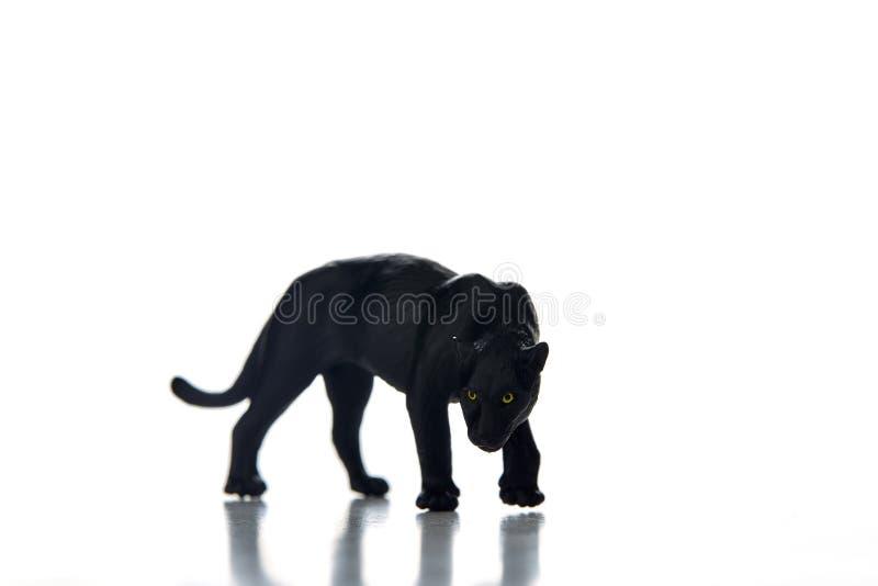 Предпосылка белизны портрета черной пантеры стоковое изображение