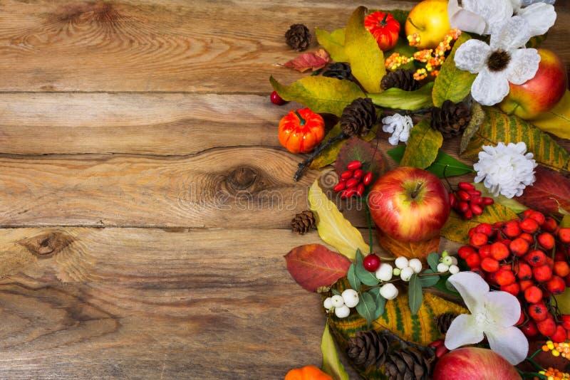 Предпосылка благодарения с белыми ягодами и цветками, курортом экземпляра стоковые фотографии rf