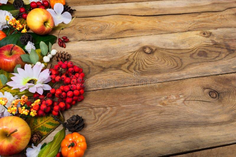 Предпосылка благодарения с рябиной и белой маргариткой, космосом экземпляра стоковая фотография rf