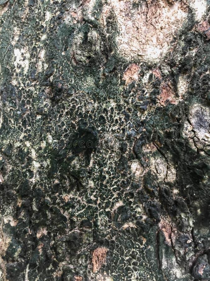 Предпосылка Брайна, зеленых и черных текстуры стоковое фото