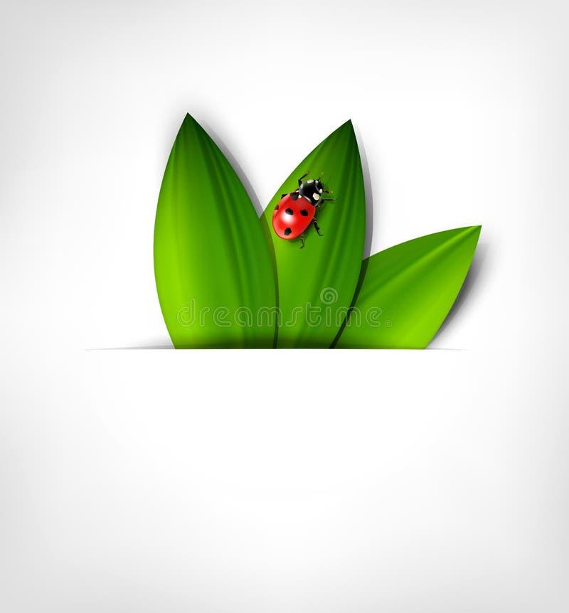 Предпосылка вектора с листьями и ladybird