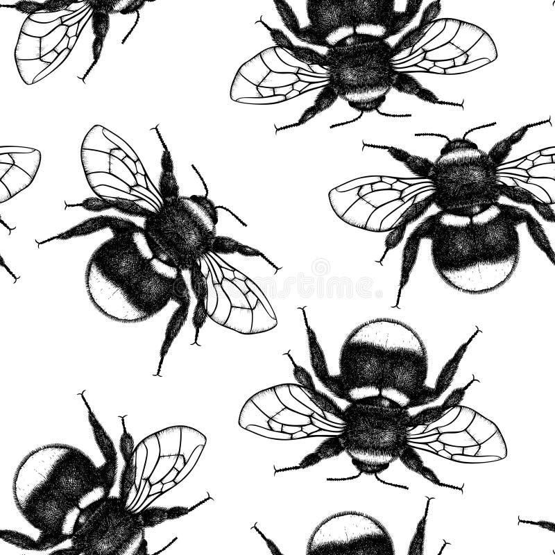 Предпосылка вектора с чертежами Bumlebee Эскиз насекомого руки вычерченный изолированный на белизне Гравирующ стиль путайте иллюс иллюстрация штока