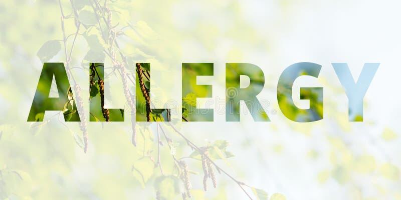 Предпосылка весны, аллергия надписи на предпосылке цвести дерева березы Множественная выдержка, двойная стоковые изображения