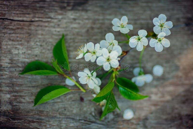 Предпосылка весны с белыми вишневыми цветами и деревенским деревянным столом для украшения пасхи стоковые фото