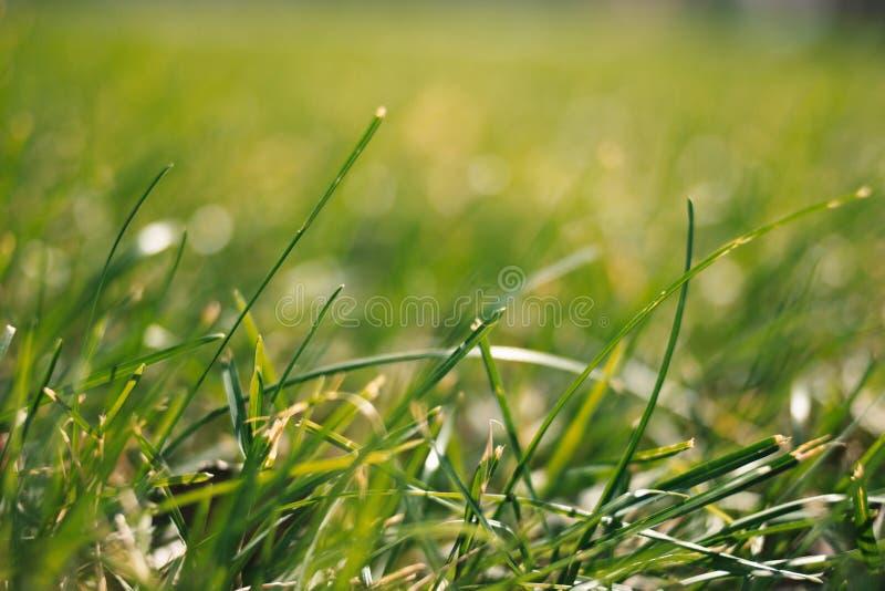 Предпосылка весны с взглядом точки заземления зеленой травы стоковое фото