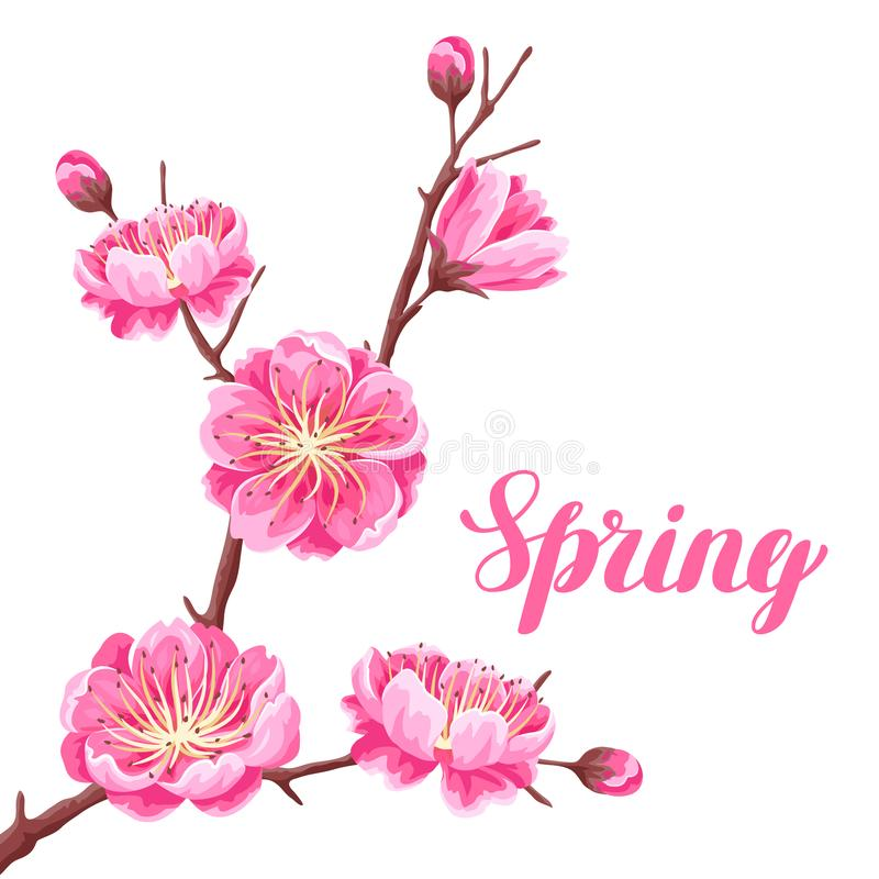 Предпосылка весны с Сакурой или вишневым цветом Флористический японский орнамент зацветая цветков бесплатная иллюстрация