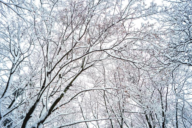 Предпосылка ветвей дерева в снеге стоковая фотография rf