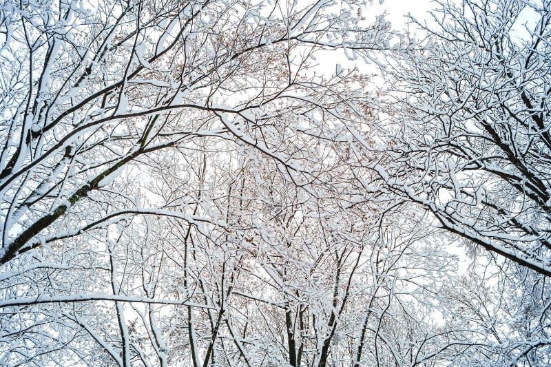 Предпосылка ветвей дерева в снеге стоковая фотография