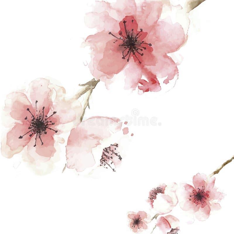 Предпосылка вишневого цвета в дизайне стиля акварели иллюстрация вектора