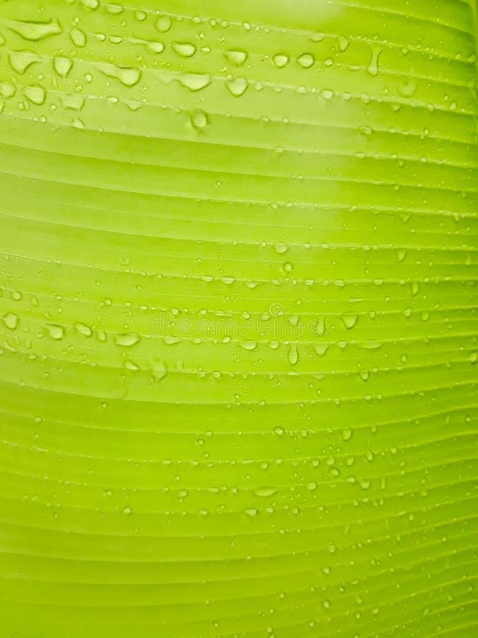 Предпосылка выходит зеленый с ясными линиями И там капелька это листья стоковые фото
