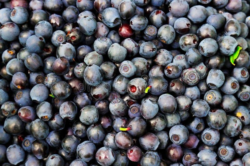Предпосылка голубик ягоды Серии свежей я собрал в древесинах стоковые изображения rf