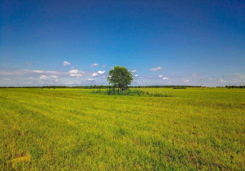 Предпосылка голубого неба и скошенной травы стоковое фото rf