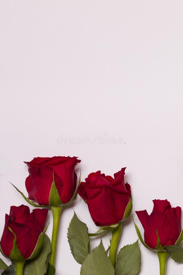 Предпосылка дня Святого Валентина, безшовная белая предпосылка с границей красной розы, космосом текста бесплатной копии стоковые фото