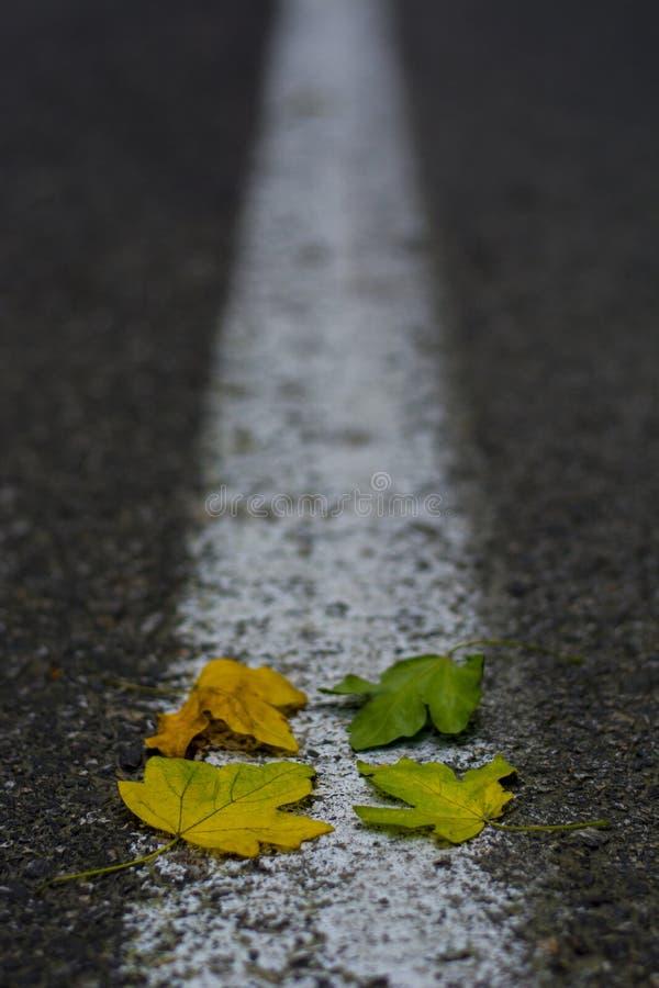 Предпосылка другого цвета 4 листьев на дороге асфальта стоковое изображение