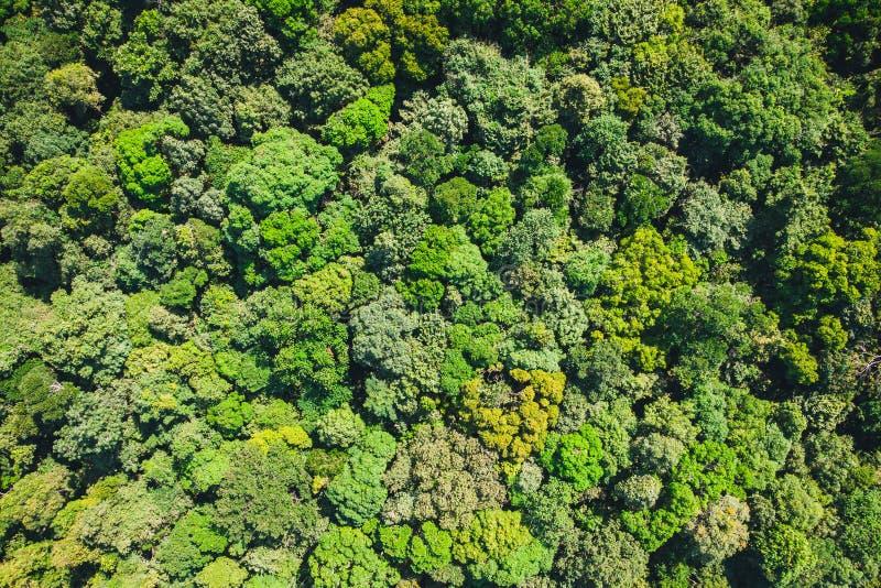 предпосылка зелена от джунглей или леса воздушного взгляда сверху тропического леса, взгляда леса текстуры сверху стоковое фото rf