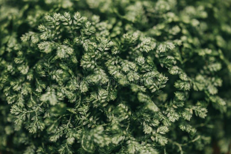 Предпосылка зеленого растения, красота природы, зеленое растение немного выходит абстрактная предпосылка стоковое фото rf