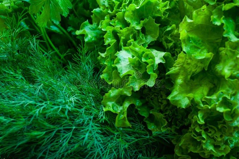 Предпосылка зеленого салата и пук свежего органического укропа стоковые изображения
