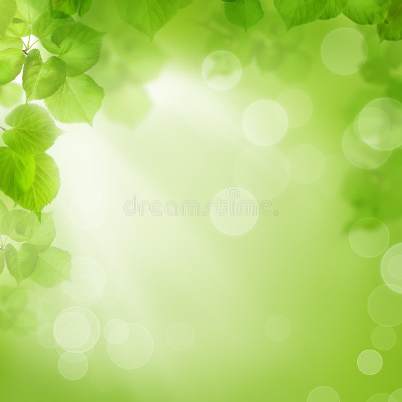 Предпосылка зеленых листьев, лета или весны стоковое фото