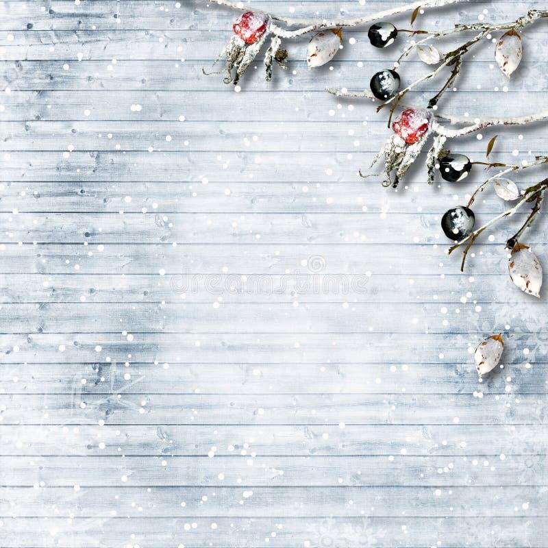 Предпосылка зимы с ветвями и ягодами заморозка С экземпляр-космосом стоковые изображения