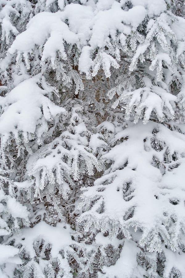 Предпосылка зимы Whte красивая естественная стоковое изображение rf