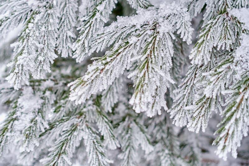 Предпосылка зимы Whte красивая естественная стоковая фотография rf