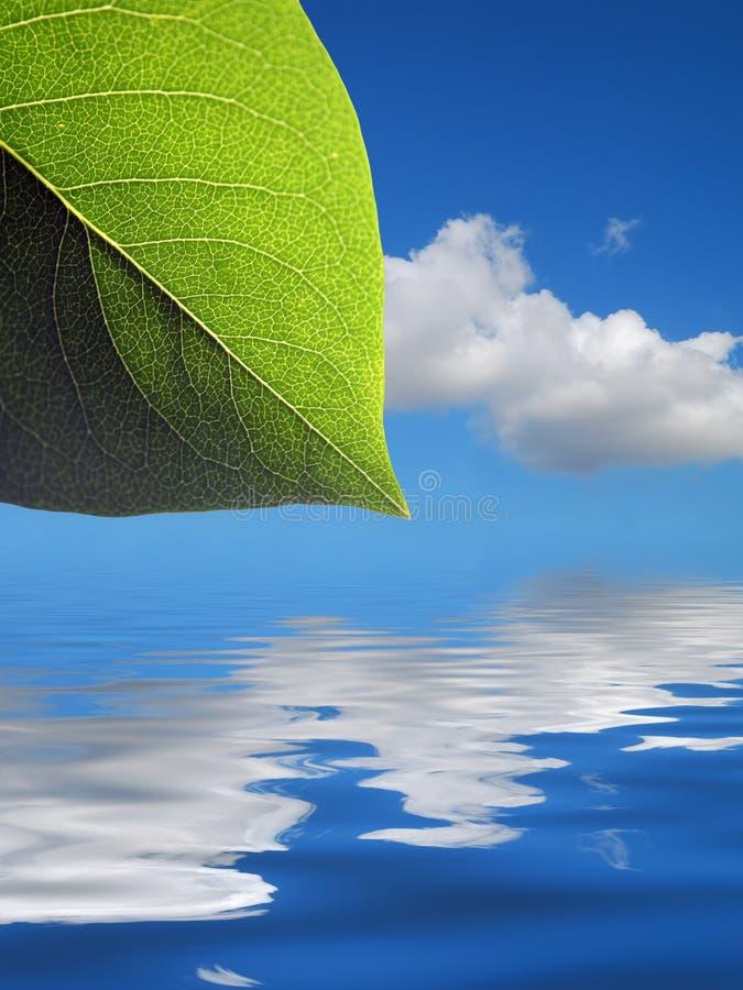 Предпосылка картины листьев иллюстрация вектора