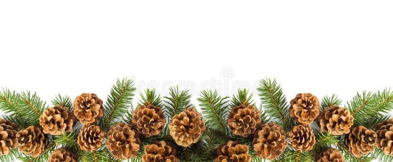 Предпосылка конусов сосны праздничная с ветвью ели стоковое фото