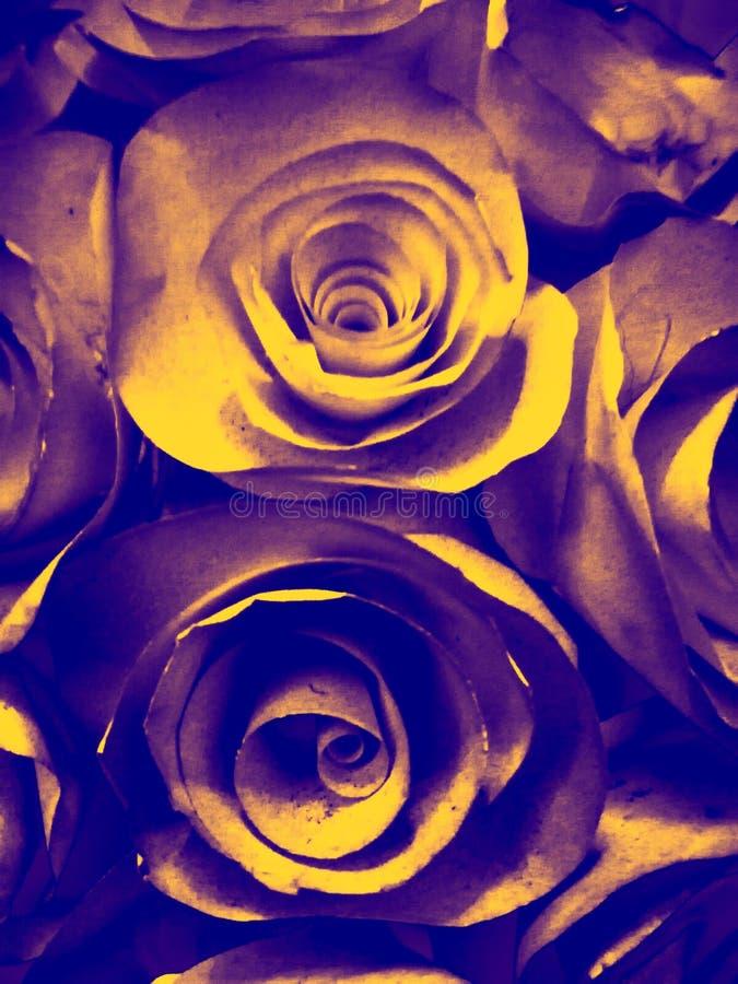 Предпосылка красивого оранжевого золота желтые и черные розовые текстура иллюстрации цветка и в саде стоковые изображения rf