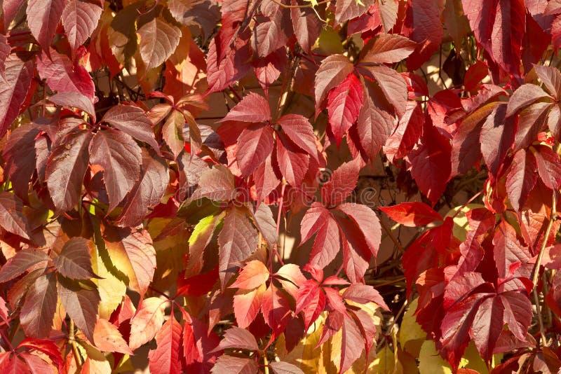 Предпосылка красочных ярких листьев осени стоковые фото