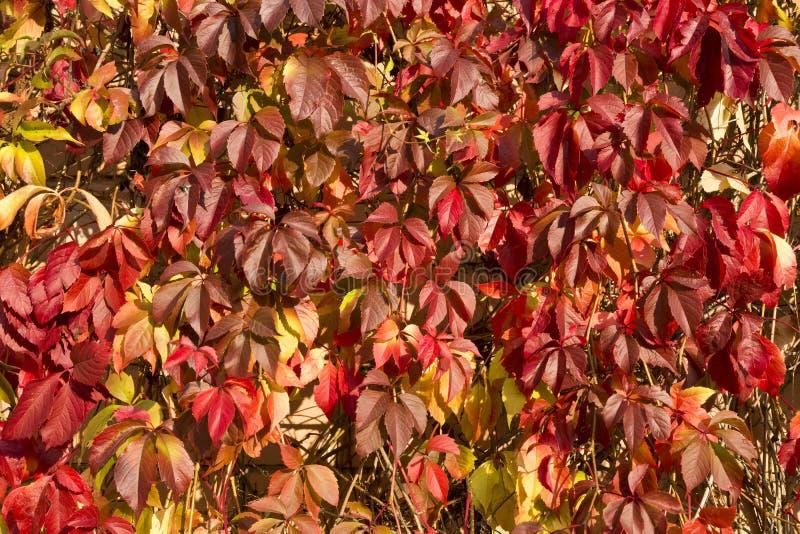 Предпосылка красочных ярких листьев осени стоковое фото
