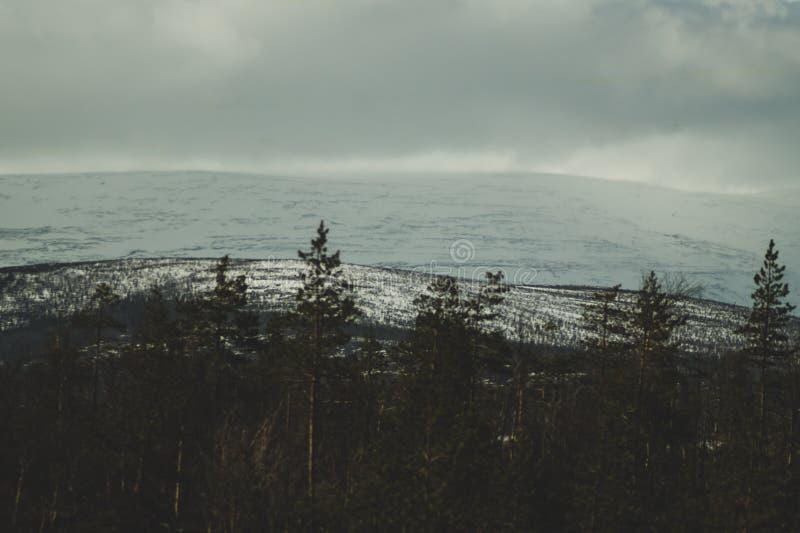 Предпосылка ландшафта горы снежные холмы и лес стоковое изображение
