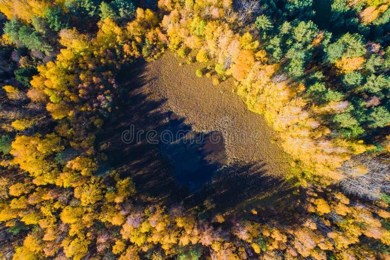 Предпосылка леса падения сельский пейзаж природа осени голубая длинняя затеняет небо Воздушный красочный ландшафт Желтый лес осен стоковые изображения