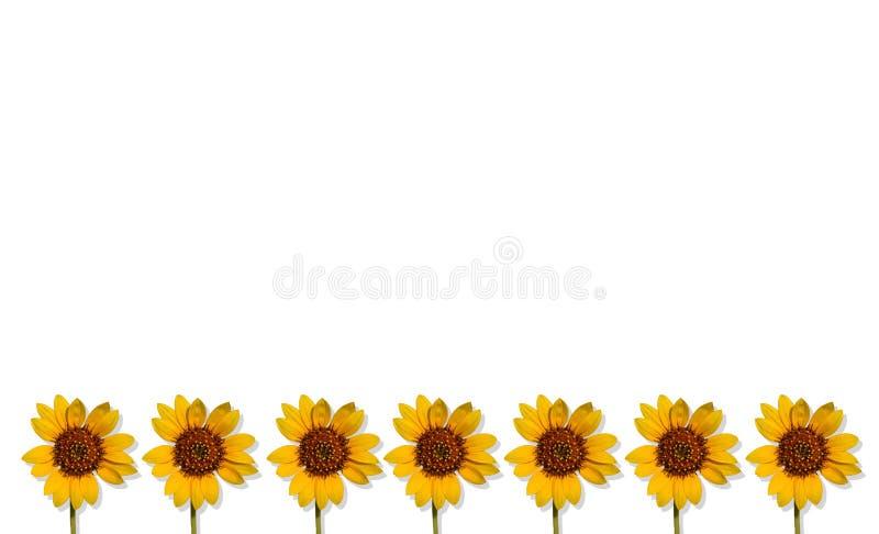 Предпосылка лета Happpy с солнцецветами стоковое изображение rf