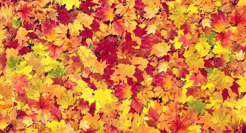 Предпосылка листьев осени красочная стоковое фото rf