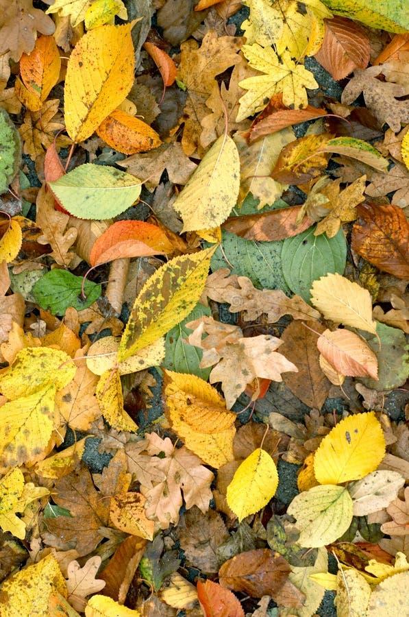 Предпосылка листьев осени стоковое изображение rf