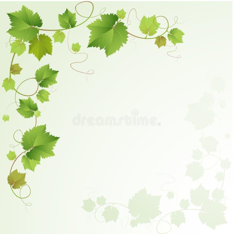 Предпосылка лозы виноградин иллюстрация вектора