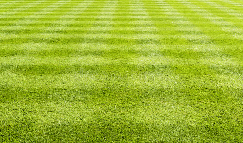 Предпосылка лужайки травы стоковое изображение rf