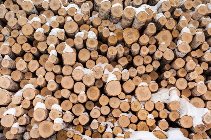 Предпосылка много свежих спиленных хоботов березы, запыленная с снегом в зиме стоковая фотография