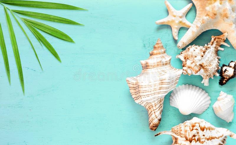 Предпосылка моря лета - seashells на голубой деревянной предпосылке стоковое фото