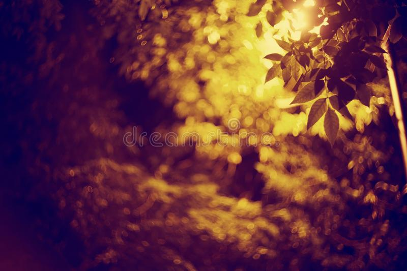 Предпосылка ночи с листьями, в свете от фонарика стоковая фотография