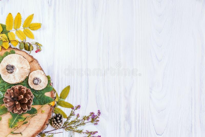 Предпосылка осени белая деревянная стоковое изображение