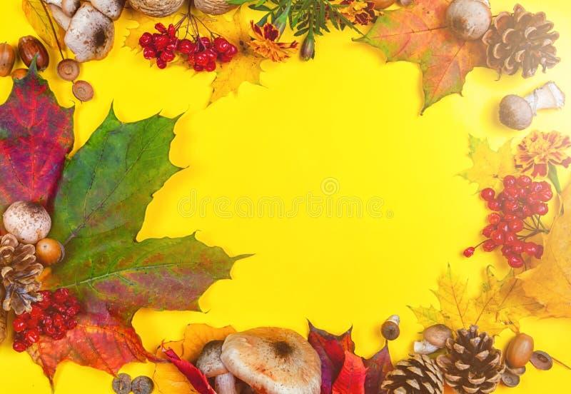 Предпосылка осени желтого цвета и покрашенных листьев, конусов и гаек установьте текст стоковые изображения