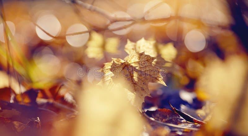 Предпосылка осени от упаденных кленовых листов стоковые изображения