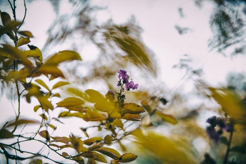 Предпосылка осени с листьями и цветками, мягким фокусом стоковые фотографии rf
