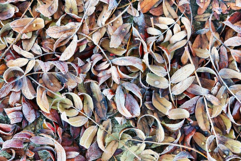 Предпосылка осени с упаденными, который замерли листьями стоковое изображение