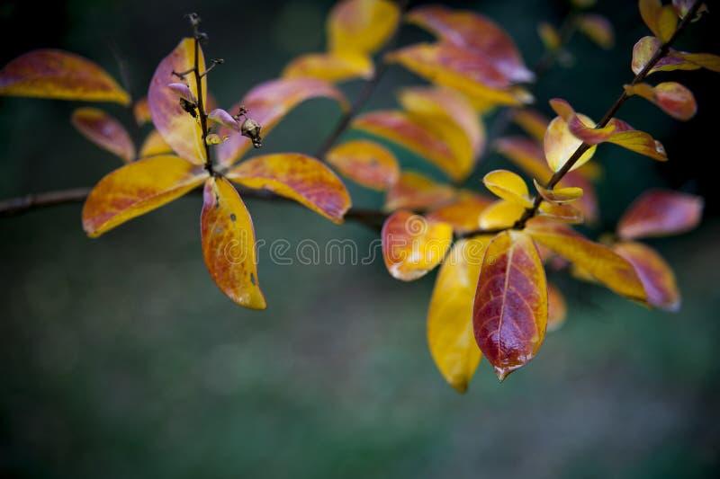 Предпосылка осени с цветастыми листьями стоковая фотография