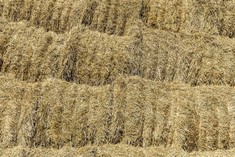 Предпосылка от кренов сена штабелированных в куче в открытом складском помещении Россия стоковые фотографии rf