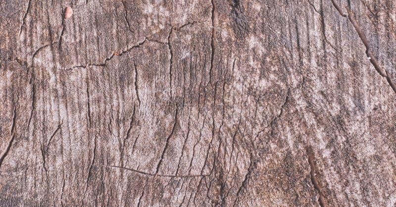 Предпосылка от спиленной старой древесины текстура старой древесины деревянный план для дизайна стоковые изображения